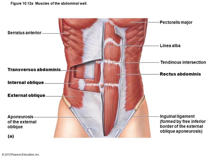 extrinsic core muscles